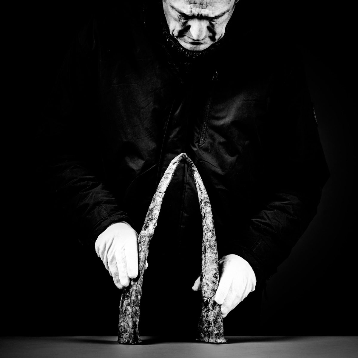 Daniel Coulet portrait